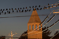Middletown, New York - Crows gather on utility wires in dowtown Middletown on Nov. 7, 2016.
