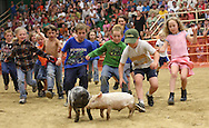 Squeals, both porcine and child, fill the arena during the greased-pig contest at the Boundary County Fair in Bonners Ferry, ID. For those who were able to catch and hold on to a pig, their prize was to keep it.