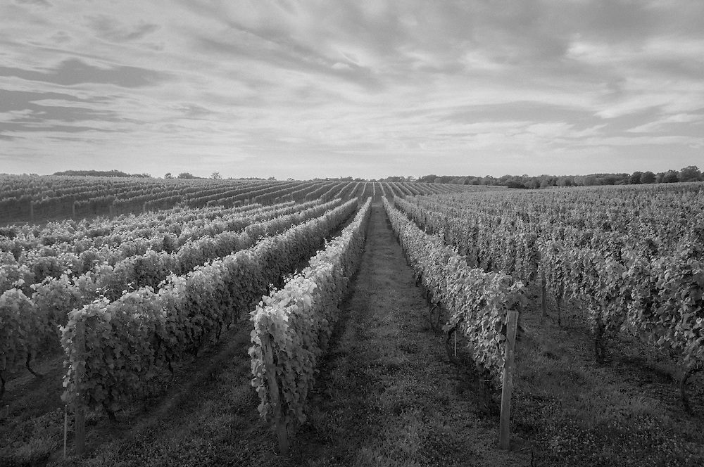 Wolffer Estate Vineyards, Sagaponack, Long Island, New York