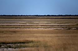 NAMIBIA ETOSHA 29APR14 - Landscape in the salt pan of Etosha National Park, Namibia.<br /> <br /> <br /> <br /> jre/Photo by Jiri Rezac<br /> <br /> <br /> <br /> © Jiri Rezac 2014