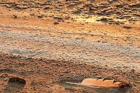 Il complesso produttivo delle saline è situato nel comune italiano di Margherita di Savoia (nome dato dagli abitanti in onore alla regina d'Italia che molto si adoperò nei confronti dei salinieri) nella provincia di Barletta-Andria-Trani in Puglia. Sono le più grandi d'Europa e le seconde nel mondo, in grado di produrre circa la metà del sale marino nazionale (500.000 di tonnellate annue).All'interno dei suoi bacini si sono insediate popolazioni di uccelli migratori e non, divenuti stanziali quali il fenicottero rosa, airone cenerino, garzetta, avocetta, cavaliere d'Italia, chiurlo, chiurlotello, fischione, volpoca..Una penna di gabbiano posata sulla riva del bacino