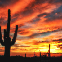 Sunset over the saguaro cactus at Sonoran Desert National Monument, Arizona.