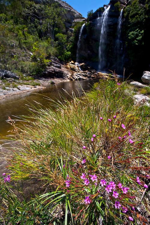 Santana do Riacho_MG, Brasil...Flores proximo a cachoeira no Alto Palacio no Parque Nacional da Serra do Cipo...Flowers nexto to a waterfall in Alto Palacio in the Serra do Cipo National Park...Foto: JOAO MARCOS ROSA / NITRO