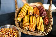 DRY FARMING COLLABORATIVE Showcase: 'Whipple' bean, 'Open Oak Party Mix' corn, 'Stella Blue' squash, 'Purple Abundance' and 'Purple Peruvian' potatoes<br /> Researchers: Amy Garrett & Lucas Nebert, OSU Farmers: Harry Short, Mudjoy Farm & Chris Homanics Chefs: Timothy Wastell, Antica Terra; Jesse McCleery, Pilgrimme; and David Gunawan, Ubuntu Canteen