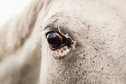 Eyes<br /> Brussels Stephex Masters<br /> © Hippo Foto - Sharon Vandeput<br /> 30/08/19