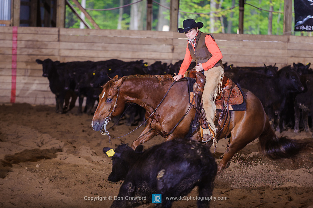 May 21, 2017 - Minshall Farm Cutting 4, held at Minshall Farms, Hillsburgh Ontario. The event was put on by the Ontario Cutting Horse Association. Riding in the 35,000 Non-Pro Class is Lynne Purdie on Timothy Taz owned by the rider.