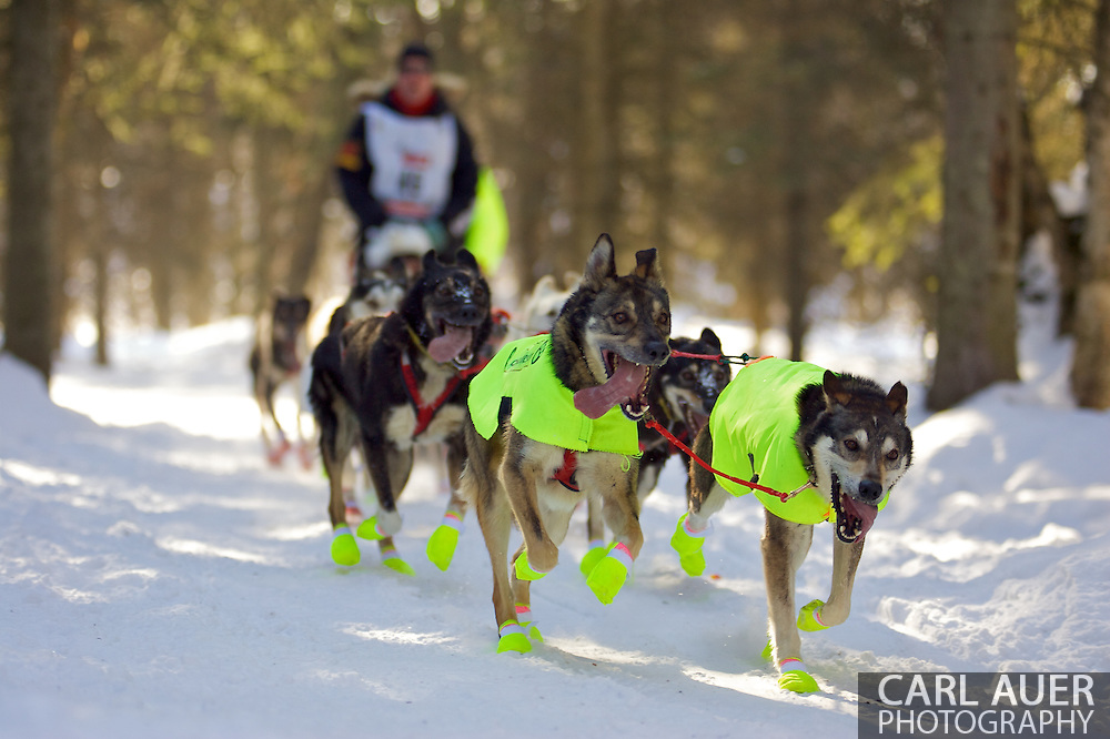March 7th, 2009:  Anchorage, Alaska - Ed Stielstra's team out of McMillan, Michigan head through the woods near Behm Lake during the 2009 Iditarod.