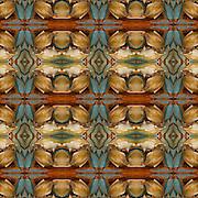 Kaleidoscope of Food - Maryland Blue Crab