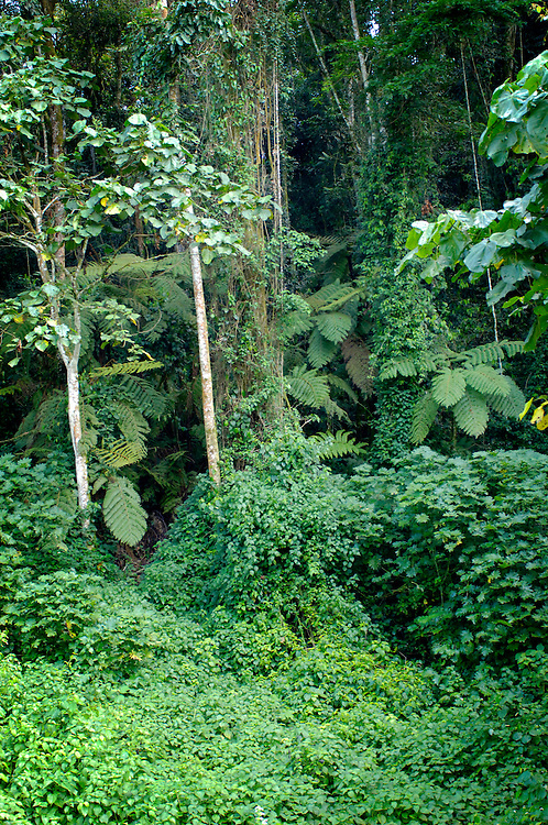 The trail head at Bwindi Inpenetrable Forest.  As it's name implies, the hike to the gorillas was steep and dense with thick vegitation.