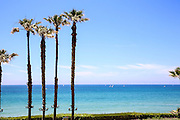 Palm trees on a beach. Photographed on the Mediterranean shore, Herzliya, Israel