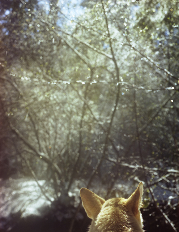 Dog looking out into winter forest