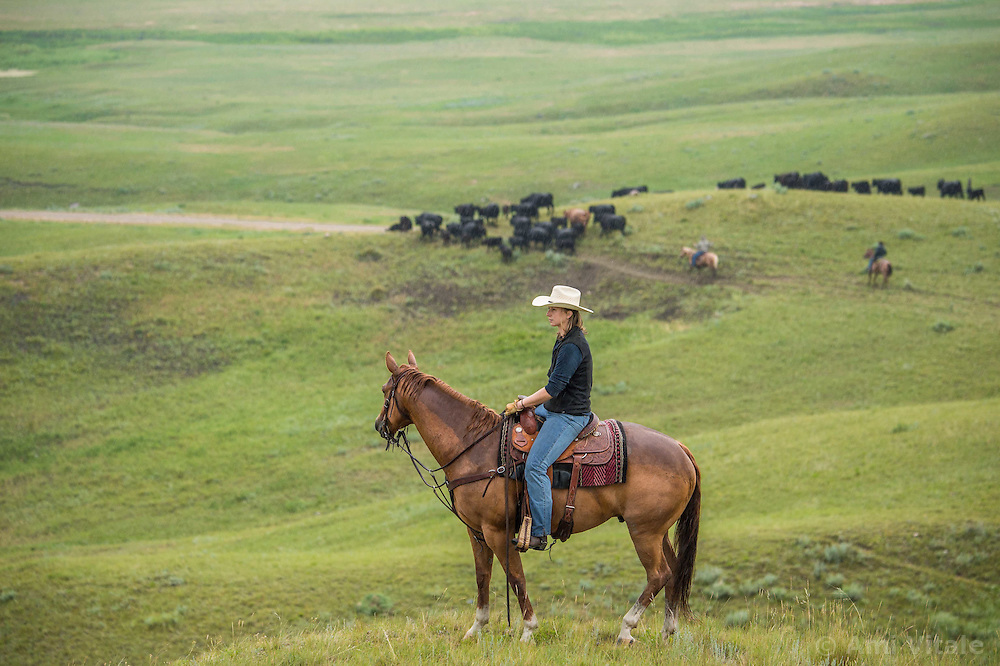 Researcher Marisa Lipsey works with The Nature Conservancy in Eastern Montana  at the Matador ranch &quot;grass bank&quot;. The &ldquo;grass bank&quot; is an innovative way to leverage conservation gains, in which ranchers can graze their cattle at discounted rates on Conservancy land in exchange for improving conservation practices on their own &ldquo;home&rdquo; ranches. In 2002, the <br /> Conservancy began leasing parts of the ranch to neighboring ranchers who were suffering from  severe drought, offering the Matador&rsquo;s grass to neighboring ranches in exchange for their  participation in conservation efforts. The grassbank has helped keep ranchers from plowing up native grassland to farm it; helped remove obstacles to pronghorn antelope migration; improved habitat for the Greater Sage-Grouse and reduced the risk of Sage-Grouse colliding with fences; preserved prairie dog towns and prevented the spread of noxious weeds. (Photo By Ami Vitale)