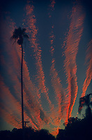 Moon, Palm Tree Silhouettes, and Orange Contrail Clouds at Sunset in St. Petersburg, Florida. Image taken with a Leica T camera and 11-23 mm wide-angle zoom lens (ISO 400, 28.5 mm, f/6.5, 1/125 sec).