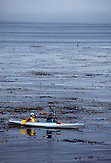 Sea Kayaking, Sea Kayak, Pacific Ocean, Ocean, Elkhorn Slough, Monterey Bay, Monterey, California