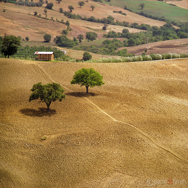 A close up summer view of the tuscan country side in val d'Orcia.
