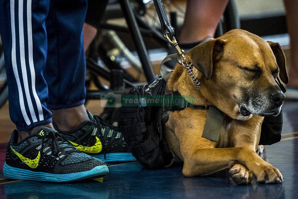 Apr 28, 2017 - Eglin Air Force Base, Florida, U.S. - Dozing Warrior Doggie. A wounded warrior's service dog surrenders to a short nap on the final day of the Air Force training camp at Eglin Air Force Base, April 28, 2017. The camp is the last team practice session before the yearly Warrior Games competition in June. Air Force photo by Samuel King Jr. (Credit Image: ? Samuel King/Air Force/DoD via ZUMA Wire/ZUMAPRESS.com)