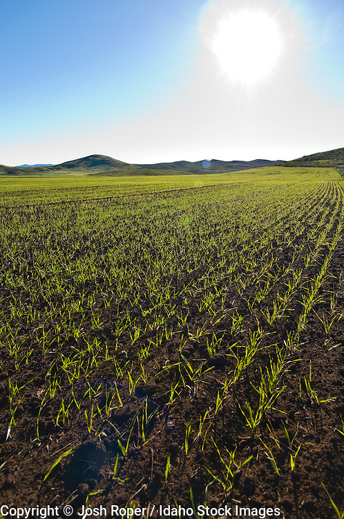 Idaho. Agricultural land sprouts new life in spring.