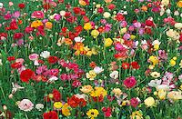 Champs de fleurs. // Flowers field