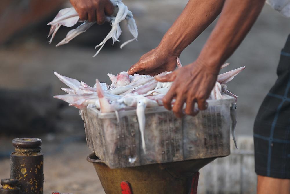 Fishermen sell fish on the beach at Jimbaran Bay, Bali, Indonesia, Friday November 11, 2011. Credit; SNPA / Peter Graney.