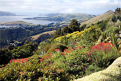 Dunedin Area, Otago Peninsula:  View of the northern end of the Otago Peninsula, taken from the gardens at Larnach Castle.  Larnach Castle, on the HighCliff Road out of Portobello, was built in 1871.  Privately owned, it is noted for its nearly one mile of bush and gardens and is open for public tours.