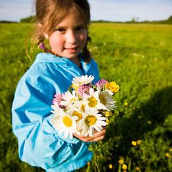 A girl (age 8) picks a bouquet of field flowers in a hay field on a farm in Ipswich, Massachusetts.