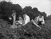 1959 – 19/09 Blackberry Picking at Sandyford