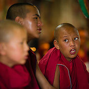 Young monks reciting scripture at a morning ceremony (puja) at Thiksey Monastery in Ladakh, India