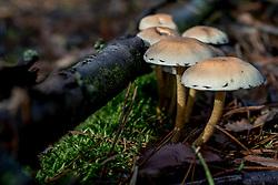19-10-2017 NED: Paddenstoelen in de natuur, Lage Vuusche