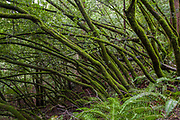 Forest Scene in Muir Woods State Park, Mill Valley, CA