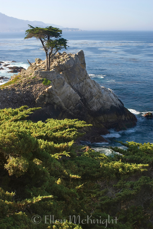 The Lone Cypress Tree on 17 Mile Drive in Pacific Grove, California.