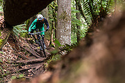 Chris Mandell in the Chuckanut Mountains of Larrabee State Park near Bellingham, WA for Bike Magazine.