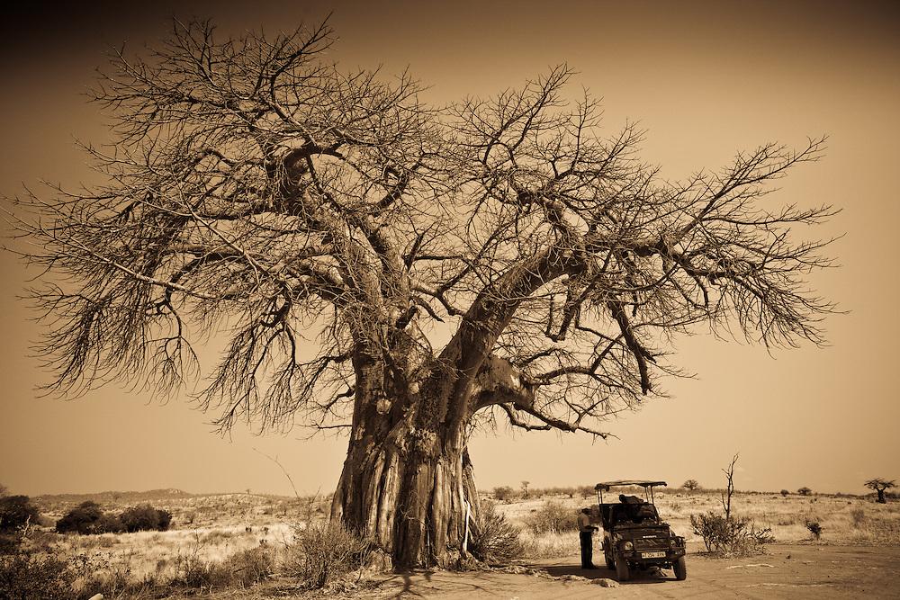 Jeep under a baobab tree, Ruaha National Park, Tanzania