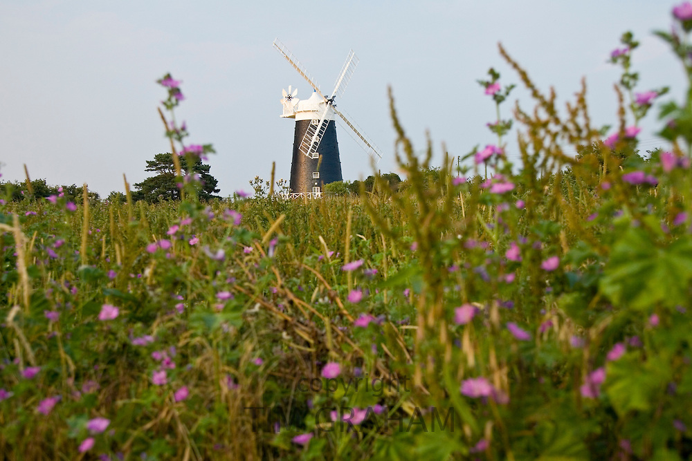 National Trust Tower Windmill near Wells-Next-the-Sea, Norfolk, United Kingdom