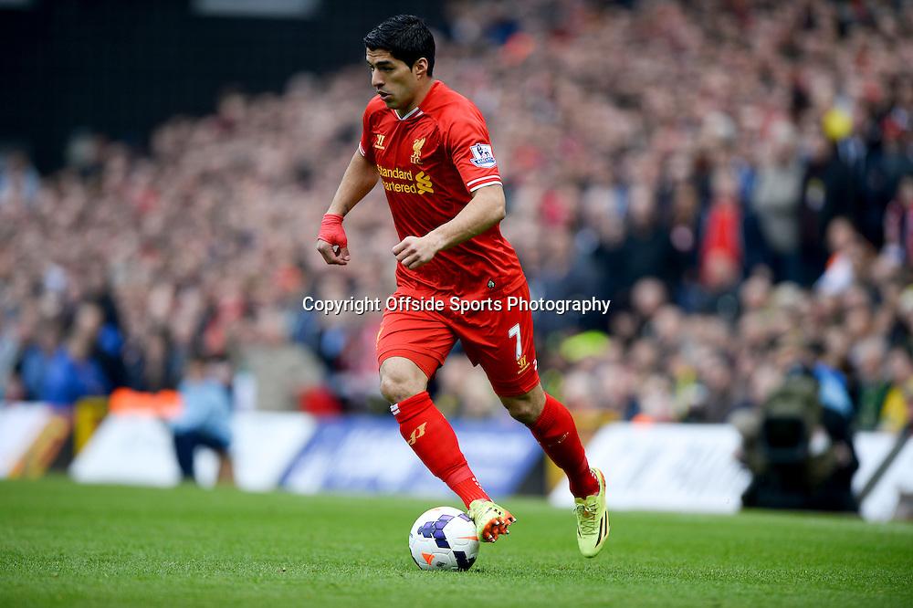 20 April 2014 - Barclays Premier League - Norwich City v Liverpool - Luis Suarez of Liverpool - Photo: Marc Atkins / Offside.