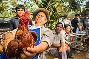 06 APRIL 2013 - SANPATONG, CHIANG MAI, THAILAND:     A man selling a fighting cock shows the bird off in the market in Sanpatong, Chiang Mai province, Thailand. The buffalo market in Sanpatong (also spelled San Patong) started as a weekly gathering of farmers and traders buying and selling water buffalo, the iconic beast of burden in Southeast Asia, more than 60 years ago and has grown into one of the largest weekend markets in northern Thailand. Buffalo and cattle are still a main focus of the market, but traders also buy and sell fighting cocks, food, clothes, home brew and patent medicines.           PHOTO BY JACK KURTZ