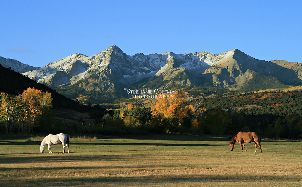 Horses grazing at the RL Ranch in Colorado