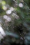 Divinopolis_MG, Brasil...Detalhe de uma aranha na teia no Parque do Gafanhoto...Detail of a spider in the spidernet in Gafanhoto Park...Foto: LEO DRUMOND / NITRO
