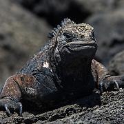 2014 Galapagos
