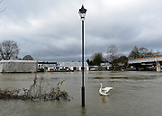 © Licensed to London News Pictures. 29/12/2012. Laleham, UK A swan stitches its wings next to lamppost standing in floodwater at Staines Upon Thames.  Flooding along the River Thames today 29th December 2012.Forecasters say the UK can expect heavy rain and winds the coming days. Photo credit : Stephen Simpson/LNP