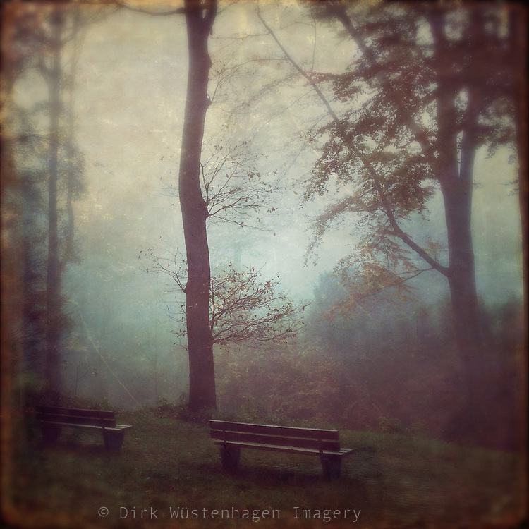 Foggy morning in a nearby park - Wupprtal, Germany