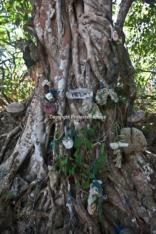 Indonesia, Lombok archipelago, Moyo island, wish tree