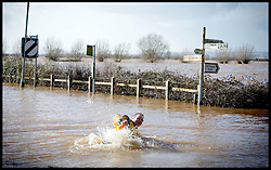 Burrowbridge, Somerset, United Kingdom.Sunday, 9th February 2014. A man falls in the flood water near Burrow Bridge as the Somerset levels continue to flood.  The levels have been flooded since the start of 2014, with people being forced to leave their homes. Picture by Andrew Parsons / i-Images
