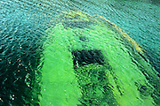 Sunken shipwreck in Tub Harbour. Georgian Bay. Lake Huron. <br /> Fathom Five National Marine Park<br /> Ontario<br /> Canada