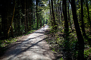 A woman walking her dogs in the Taunus forest close to Oberursel. The Taunus is a mountain range in Hessen, Germany, located north of Frankfurt.