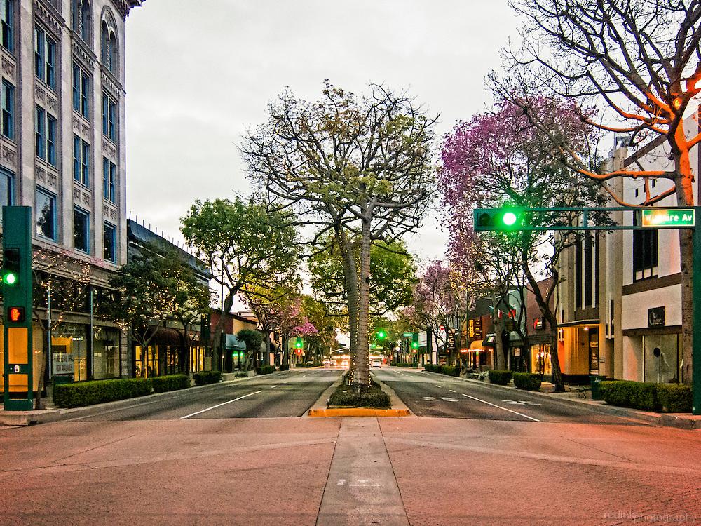 Spring color starts to break through on trees in the center divider along Harbor Blvd in downtown Fullerton. Fullerton, CA.