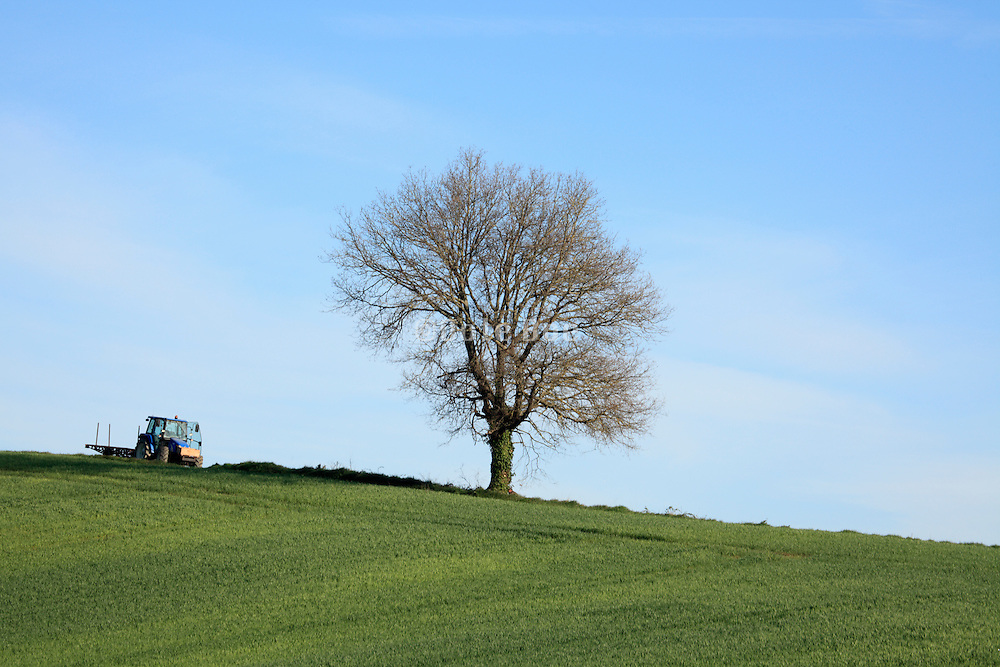 tractor arrives to cut the tree down  in rural agricultural landscape
