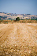 Israel, Upper Galilee, the harvested wheat fields of Kibbutz Hulata