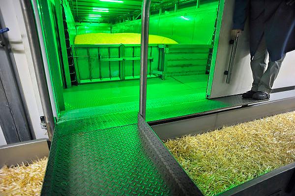 Nedrland, Oosterhout, 14-7-2011De productie van tauge.Door de besmetting met de ehec bacterie van kiemgroenten in Duitsland is de productie sterk verminderd.Foto: Flip Franssen/Hollandse HoogteFoto: Flip Franssen/Hollandse Hoogte