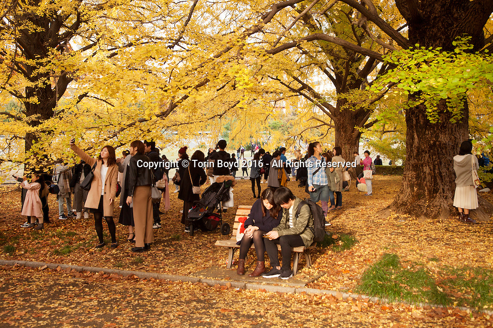 November 20, 2016, Tokyo, Japan: Due to peaking Autumn foliage and usually warm weather for this time of year, tens or thousands came out to enjoy Tokyo's Shinjuku Gyoen, a botanical garden in the center of the city. This garden which dates back to the 19th century was formerly part of the Imperial Palace Outer Garden used exclusively by Japan's Imperial family. In 1949 this 144 acre site with over 20,000 trees was opened to the public and is now classified as a national garden. Photo by Torin Boyd.