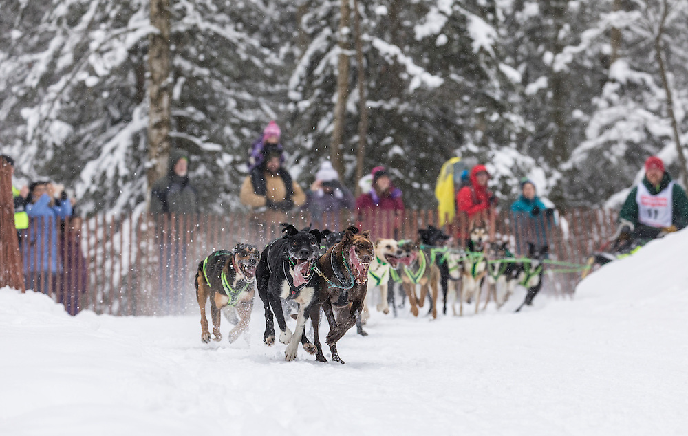 Musher Jason Dunlap competing in the Fur Rendezvous World Sled Dog Championships at Goose Lake in Anchorage in Southcentral Alaska. Winter. Afternoon.